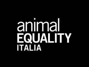 1_Animal-equality
